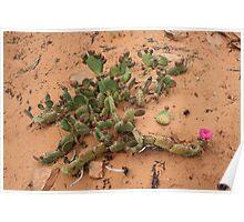 Cactus,Kodachrome State Park,Utah USA Poster