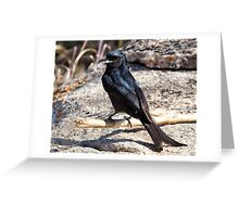 Fork Tailed Drongo Greeting Card