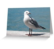 one seagull Greeting Card