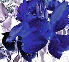 Blue Canna Lily by MSRowe Art and Design