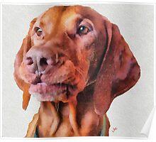 Milo Maxwell - Chief Executive Dog Poster