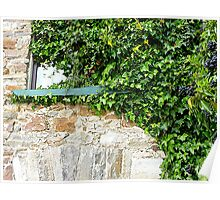 Ivy Clad Window Poster