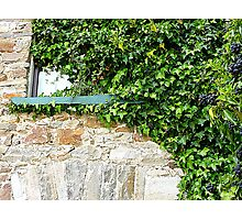 Ivy Clad Window Photographic Print