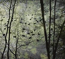 Pine Barren Sanctuary by RVogler