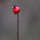 Rose hip and buds... by RichImage
