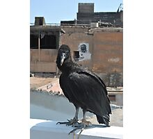 The Vulture tourist foto Photographic Print