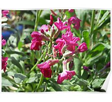 Sunlit Scented Stock Poster