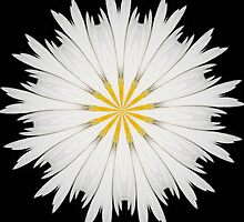 Wild Daisy Abstract by taiche