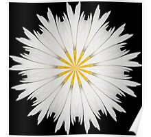 Wild Daisy Abstract Poster