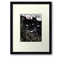 Silly Kitty Framed Print