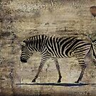 Zebra Crossing by LOREDANA CRUPI