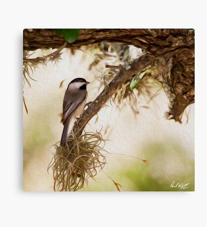 Chickadee Oil Canvas Print