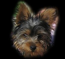 Adorable Yorkie for IPhone by pateabag