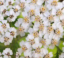 Blooms for erasing sadness by ♥⊱ B. Randi Bailey
