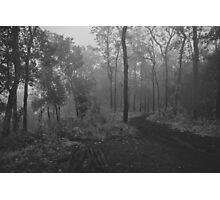 Dark forest Photographic Print