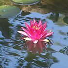 Water Lily & Lily Pads by pateabag