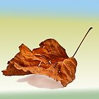 Autun leaf  by Benjamin Gelman