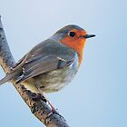Robin by Andrew Jones