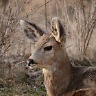 Fawn at sunset 1 by themanitou