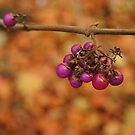 Beauty berries by Themis