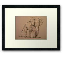 Africana Elephanta, Loxodanta Africana  Framed Print