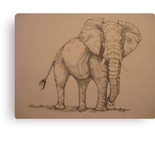 Africana Elephanta, Loxodanta Africana  Canvas Print