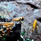 yellow locusts by Paul Dulac