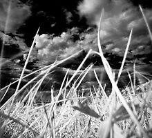 I love my grass par Jean-François Dupuis by Jean-François Dupuis