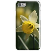 Daffodil in Springtime iPhone Case/Skin