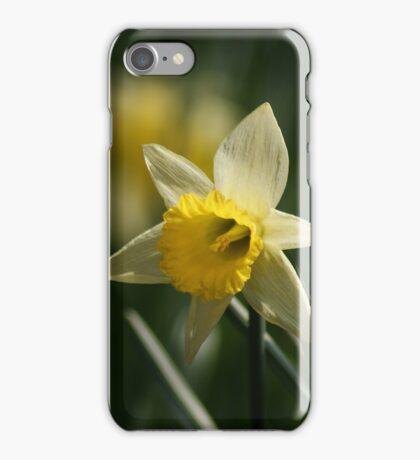 Daffodil in Springtime iPhone Case/Skin