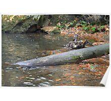 Sunken Log Poster