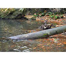 Sunken Log Photographic Print