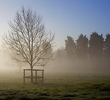 Trees in the mist by Michelle Hardy  Photography