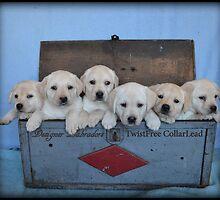 Tool box of Labradors! by DennisThornton