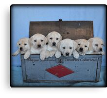 Tool box of Labradors! Canvas Print