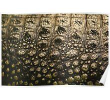 Crocodylus Moreletii Skin Poster