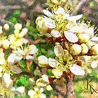 Wild Plum Flower by jkgiarratano