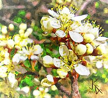 Wild Plum Flower by jkgiarratano