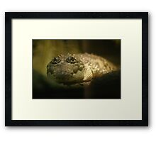 Crocodylus Moreletii Framed Print