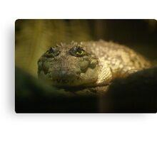 Crocodylus Moreletii Canvas Print