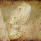 Bearded Dragon by Maria Tzamtzi