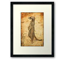 Meerkat guard Framed Print