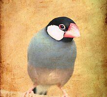 Java Sparrow by Maria Tzamtzi