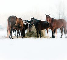 """""""Horses In Snow"""" by lx555"""