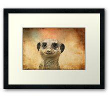 Meerkat Framed Print