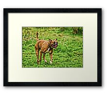 Happy Boxer Day Framed Print