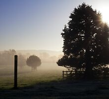 Trees and post in the mist by Michelle Hardy  Photography