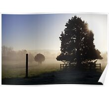 Trees and post in the mist Poster