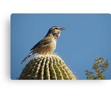 Cactus Wren Calling Canvas Print