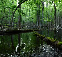 Cades Cove Swamp by tombell
